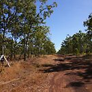 The magic of Arnhem Land - our road goes on - and on.. by georgieboy98