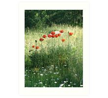 POPPIES AND DAISIES - OLD BOULDER CYN ROAD Art Print