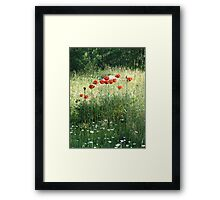 POPPIES AND DAISIES - OLD BOULDER CYN ROAD Framed Print
