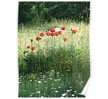 POPPIES AND DAISIES - OLD BOULDER CYN ROAD Poster