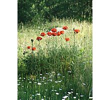 POPPIES AND DAISIES - OLD BOULDER CYN ROAD Photographic Print