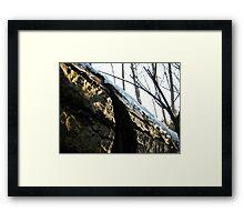 Fallen Tree. Framed Print