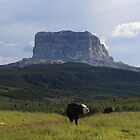 Chief Mountain by zumi