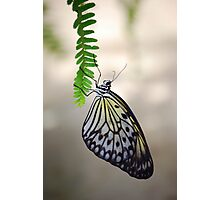 Butterfly 6 Photographic Print