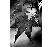 Leaves After a Autumn Rain Photographic Print