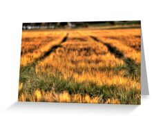 Bed of Corn Greeting Card