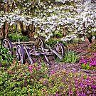 In A Smithton Country Garden by TonyCrehan