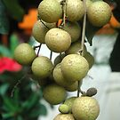 longan fruit by bayu harsa
