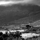 Mass Mount and Hungry by CliveOnBeara
