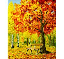 Bench under the maple tree Photographic Print