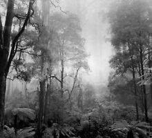 Misty Forest  by Alex Fricke