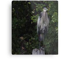 Great Blue Heron from Okauchee Wisconsin Metal Print
