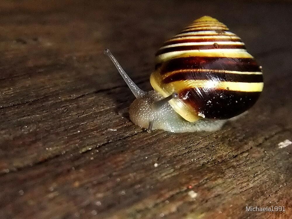 Banded Snail (Cepaea hortensis) by Michaela1991