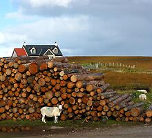 C'mon Baaaaa-by, Light My Scottish Fire by artwhiz47