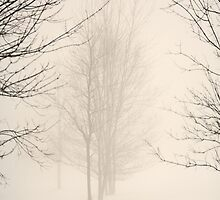 Foggy Winter Day by Yannik Hay