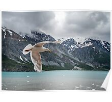 Glacier Bay Fly By Poster