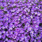 May Flowers of Gimmelwald, Switzerland by M-EK