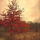 Red Oak Tree by Olivia Joy StClaire