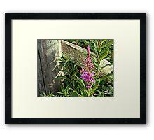 ROSEBAY WILLOW - HERB Framed Print