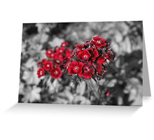 Hint of red Greeting Card
