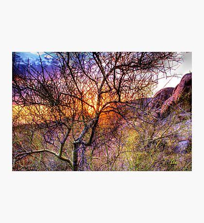 Sunset Bush-1 Photographic Print