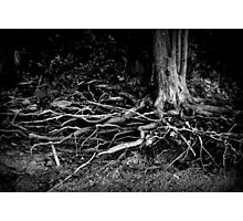 Wired Roots Photographic Print