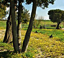 April Morning-Monterosi Italy by Deborah Downes