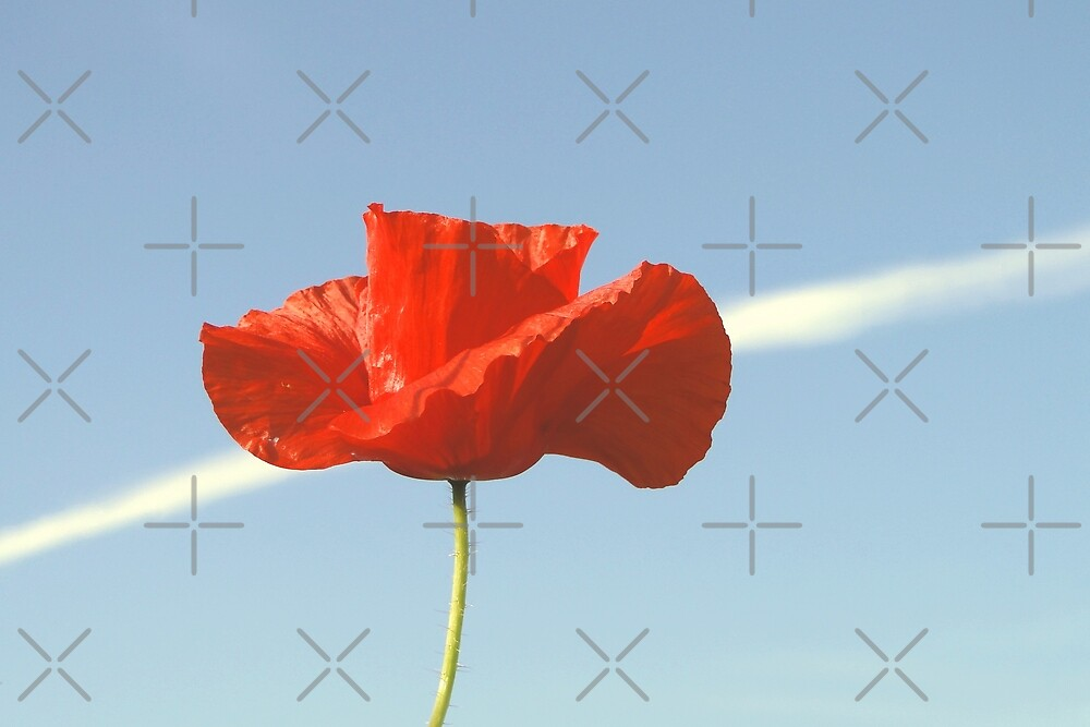 The Poppy And The Con Trail by Barrie Woodward
