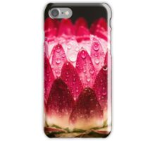 pink strawflower with raindrops on the petals iPhone Case/Skin