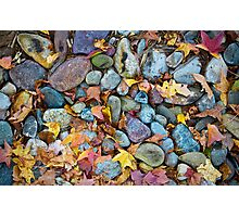 Pieces of Fall Photographic Print