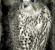 Kestrel in B&W by Fe Messenger