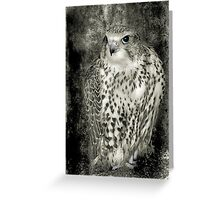 Kestrel in B&W Greeting Card
