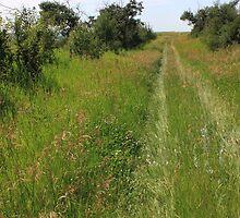 A prairie trail by Jim Sauchyn