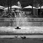 Kadriorg Park by Lucinda Walter