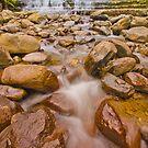 Below Liffey Falls by Neil