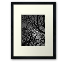 CHAPEL TREES Framed Print
