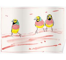 Three Pink Finches Poster