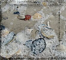Seashells in the Surf by MotherNature