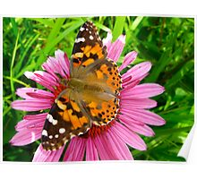 Painted Lady pays a visit Poster