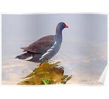 Matching legs and beak Poster