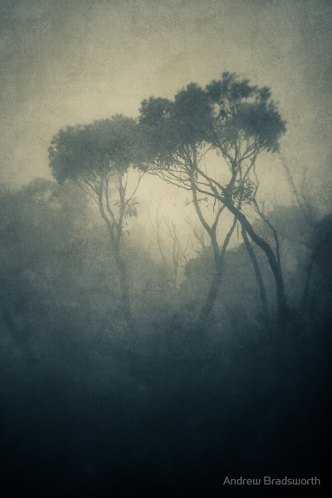 first light by Andrew Bradsworth