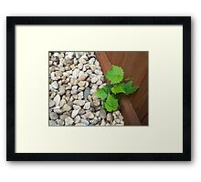 Between a Rock and a Hard Place Framed Print
