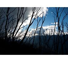 Untitled- Mt Sterling Branches Photographic Print