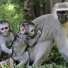 Mischievous Monkeys by jozi1