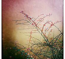 Berberis by Linda Lees