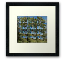 Sycamore Windows Framed Print