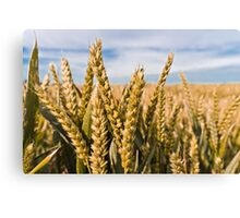 Wheat Canvas Print