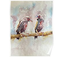 Painted Finches Poster