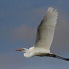 Wingspead by byronbackyard