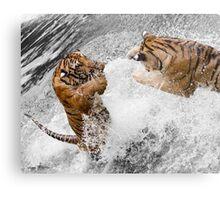 Leaping Tigers Metal Print